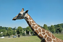 West Midland Safari Park, Bewdley, United Kingdom