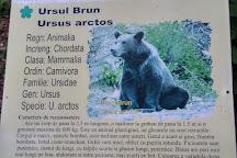 Cascada Urlatoarea, Busteni, Romania