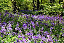 Poulton Wood Nature Reserve, Aldington, United Kingdom