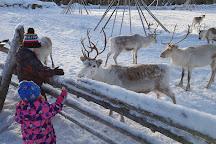 Kopara Reindeer Park, Luosto, Finland