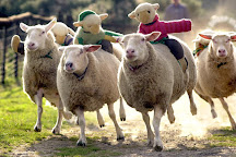 The Big Sheep., Bideford, United Kingdom
