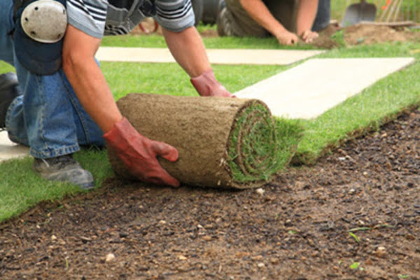 Sod being laid for landscaping in Pembroke Pines, FL