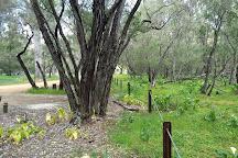 Ludlow Tuart Forest National Park, Busselton, Australia