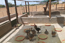 Highgate Ostrich Show Farm, Oudtshoorn, South Africa