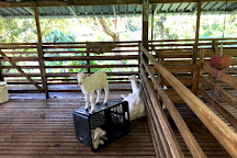 Saanen Dairy Goat Farm, Balik Pulau, Malaysia