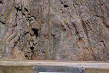 Big Tree, Orick, United States