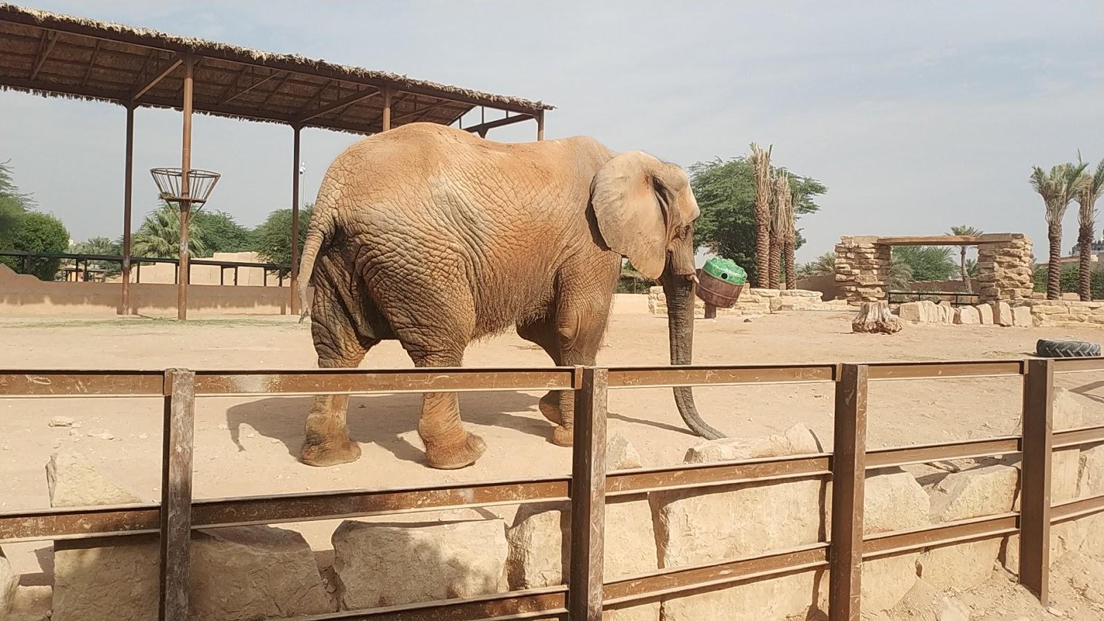 قم بزيارة حديقة الحيوانات في رحلتك إلى الرياض