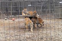 Exotic Feline Rescue Center, Centerpoint, United States