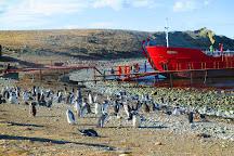 Isla Magdalena, Punta Arenas, Chile