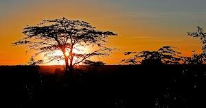 Phoenix Safaris