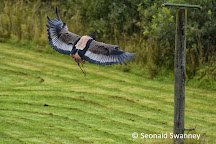 World of Wings Birds of Prey Centre, Cumbernauld, United Kingdom