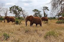 LUMO Community Wildlife Sanctuary, Tsavo National Park West, Kenya