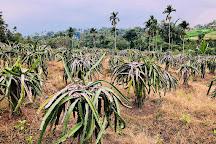 Warso Durian Farm, Bogor, Indonesia