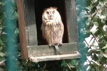 The Owls Trust, Llandudno, United Kingdom