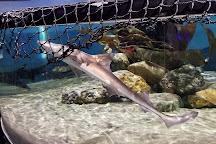 Central Coast Aquarium, Avila Beach, United States