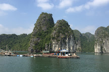 Dolphin Boat, Cat Ba, Vietnam