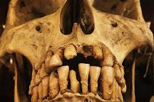 Museo di Anatomia Umana, Turin, Italy