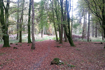 Portumna Forest Park, Portumna, Ireland