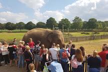 Woburn Safari Park, Woburn, United Kingdom