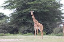 Acacia Adventures and Safaris, Moshi, Tanzania