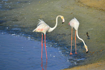 Ras Al Khor Wildlife Sanctuary, Dubai, United Arab Emirates