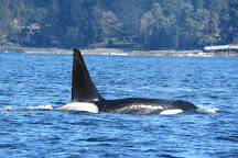 Vancouver Island Whale Watch, Nanaimo, Canada