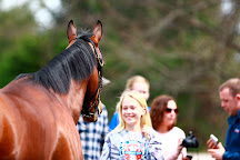 Thoroughbred Heritage Horse Farm Tours, Lexington, United States