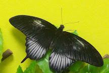 Butterfly House Varna, Varna, Bulgaria