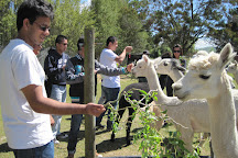 The Alpaca Place, Masterton, New Zealand