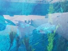Aquarium of the pacific Los Angeles