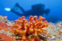 Soller Divers, Port de Soller, Spain