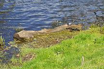 Chadwick Lake, Newburgh, United States