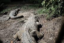 Semenggoh Nature Reserve, Kuching, Malaysia