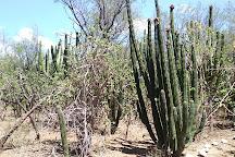 Cactus Sanctuary, El Triunfo, Mexico