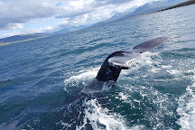 Ambassador Whale Watching, Akureyri, Iceland