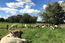 Gem Alpaca Stud, Fairlie, New Zealand
