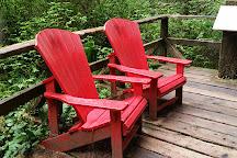 Rainforest Trail, Tofino, Canada
