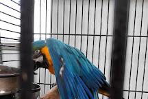 Parrot Island - Exotic Bird Sanctuary, Peachland, Canada