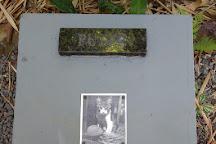 Cemiterio De Gatos, Blumenau, Brazil