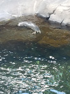 Sea Lion Pool washington-dc USA