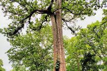 Parambikulam Tiger Reserve, Palakkad, India