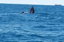 Whale One, Mooloolaba, Australia