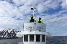 Arctic Sea Tours Whale Watching, Dalvik, Iceland