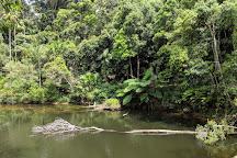 Eungella National Park, Eungella, Australia