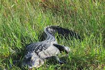 Anhinga Trail, Everglades National Park, United States