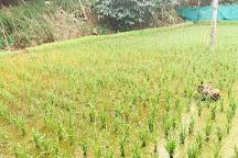Kerala Farm, Anaviratty, India