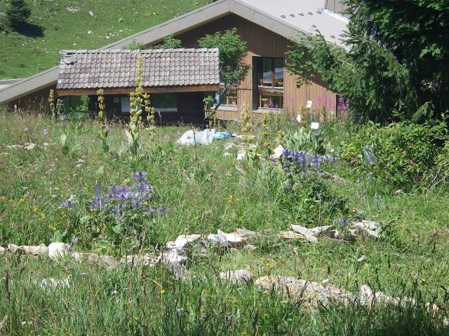 Jardin Alpin du Semnoz - France Nature Environnement 74