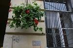 Арагви, Канонерская улица, дом 12 на фото Санкт-Петербурга