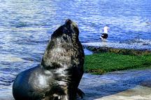 Puerto de Punta del Este, Punta del Este, Uruguay
