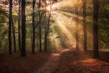 Nationaal Park Utrechtse Heuvelrug, Utrechtse Heuvelrug, The Netherlands